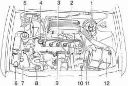 Подкапотное пространство автомобилей с бензиновым двигателем